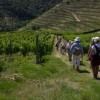 Hiking in Douro