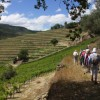 Hiking in Douro Landscape