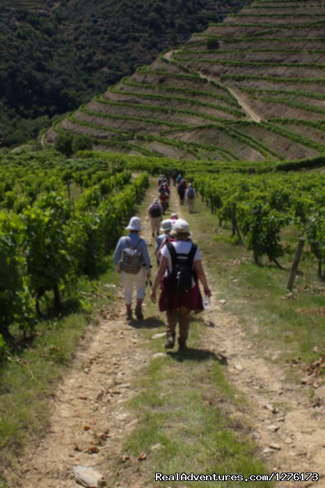 Walking in Vineyards | Image #2/26 | Porto & The Green Coast 7D