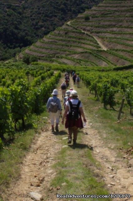 Walking in Vineyards - Porto & The Green Coast 7D