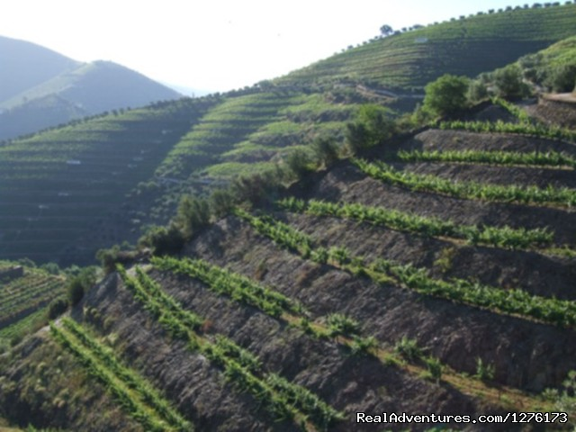 Image #20 of 26 - Douro, the Old Ways