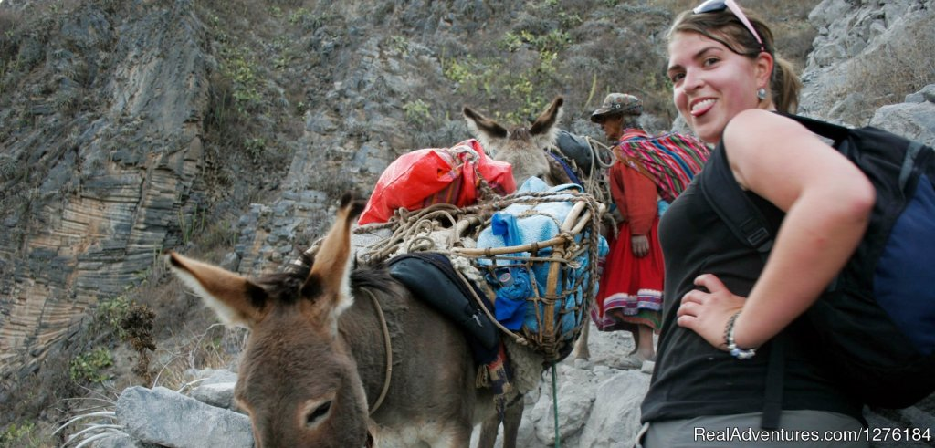 Donkey To Climb Us In Case You Get Tired | Image #16/20 | Colca Canyon trek Arequipa -Per?