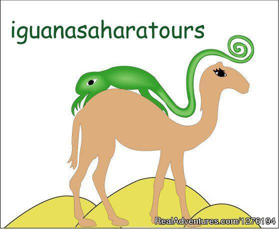 Traveling In Morocco Day Tours Marrakech: IGUANASAHARATOURS MARRAKECH MOROCCO 4x4