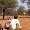 Volunteers tracking giraffe on foot