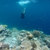NEW: Snorkel Cruise in Maldives