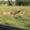 Great Adventures in Africa Kenya wildlife viewing