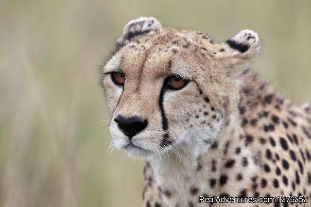 2014 Tanzania Safaris Tours -Ngorongoro /Serengeti: Tanzania safari