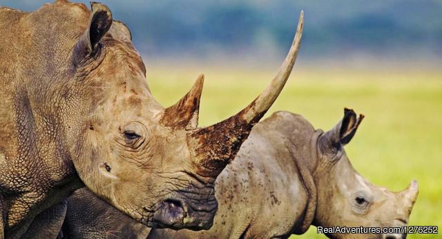 Tanzania safari - 2014 Tanzania Safaris Tours -Ngorongoro /Serengeti