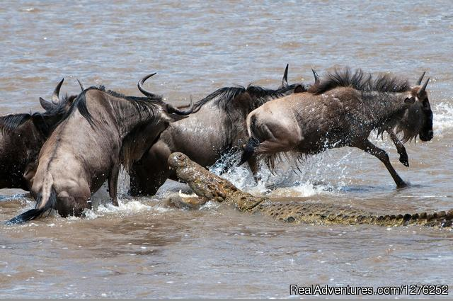 - 2014 Tanzania Safaris Tours -Ngorongoro /Serengeti