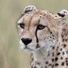2014 Tanzania Safaris Tours -Ngorongoro /Serengeti Arusha, Tanzania Wildlife & Safari Tours