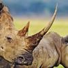 2014 Tanzania Safaris Tours -Ngorongoro /Serengeti