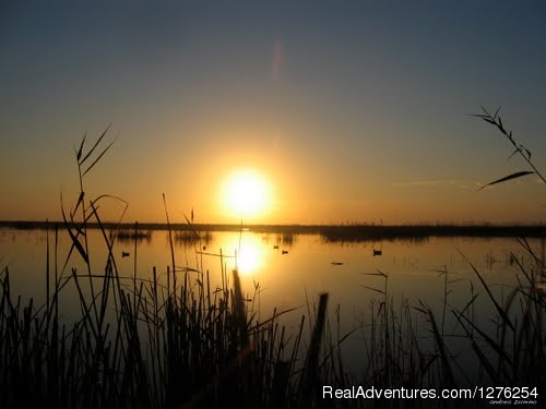 Birdwatching resort with ornithologist guide The reeds of Ebro natural park