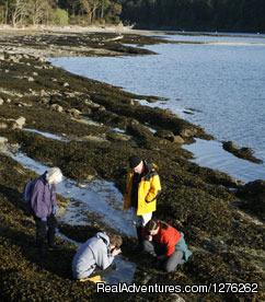 Being captivated by Tide Pools - Adventure Cruises with Maple Leaf Adventures