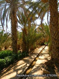 Oasis inside the desert - Best Of Morocco Experience
