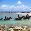 Braco Stables, Jamaica Horseback Ride n' Swim Tour Horseback Riding Jamaica