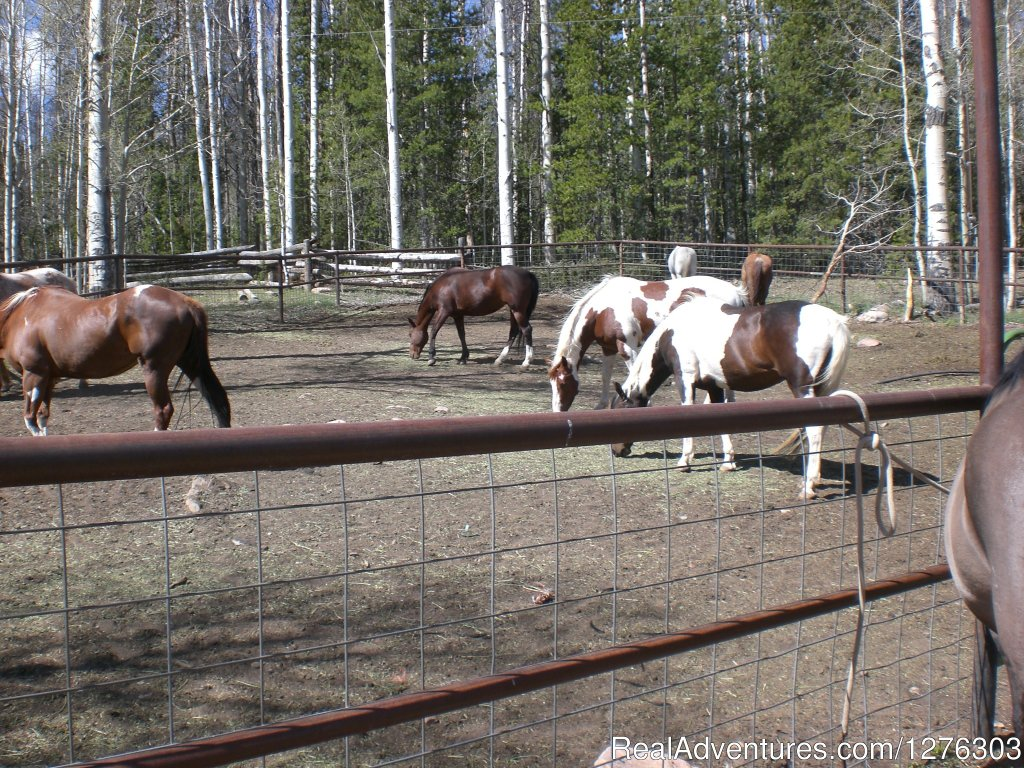 Horses done for the day | Image #2/7 | Horseback Wilderness Camping & Fishing Trips