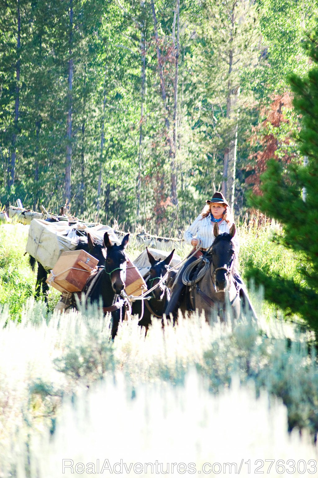 Pack String | Image #5/7 | Horseback Wilderness Camping & Fishing Trips