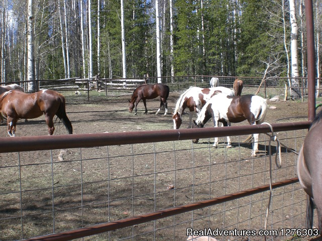 Horses done for the day - Horseback Wilderness Camping & Fishing Trips
