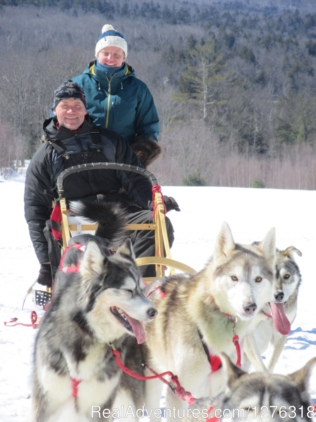 Musher Training with our Double Driver Sled | Image #10/13 | Valley Snow Dogz - White Mountain Sled Dog Tours