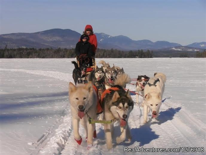 Double Driver Sled 'Great' for a very tall passenger | Image #8/13 | Valley Snow Dogz - White Mountain Sled Dog Tours