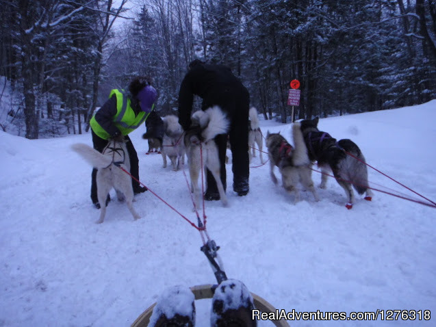 Twilight and Night Tours, Waterville Valley NH - Valley Snow Dogz - White Mountain Sled Dog Tours