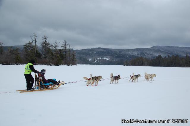 Taking A Break On Squam Lake NH - Valley Snow Dogz - White Mountain Sled Dog Tours