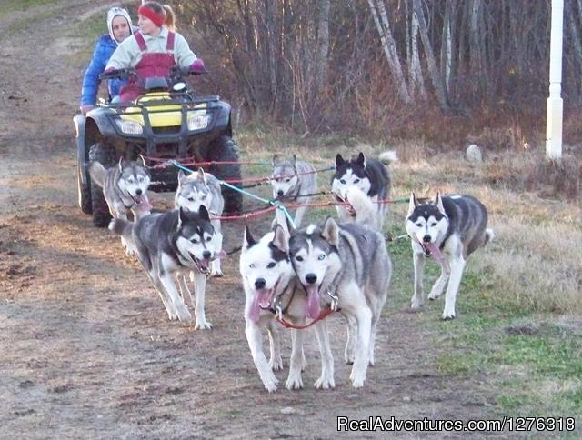 FALL Sled Dog Training Tours, Thornton NH - Valley Snow Dogz - White Mountain Sled Dog Tours