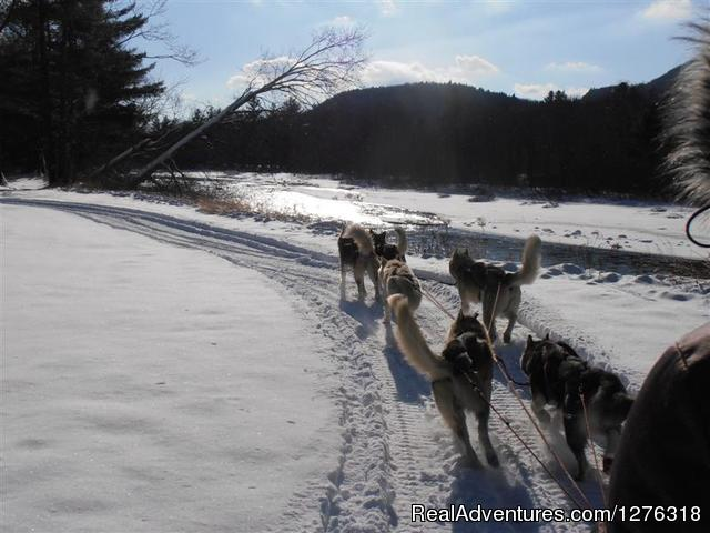 WINTER  Tours, Thornton NH - Valley Snow Dogz - White Mountain Sled Dog Tours