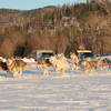 Valley Snow Dogz - White Mountain Sled Dog Tours Dog Sledding Thornton, United States