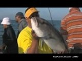 - One Day DeepSea Offshore Bottom Lake Fishing Trips