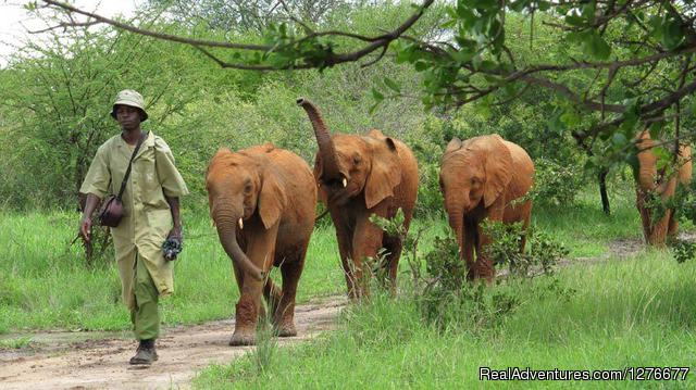 - Professional Safaris' Route, Lodge & Tented Camp