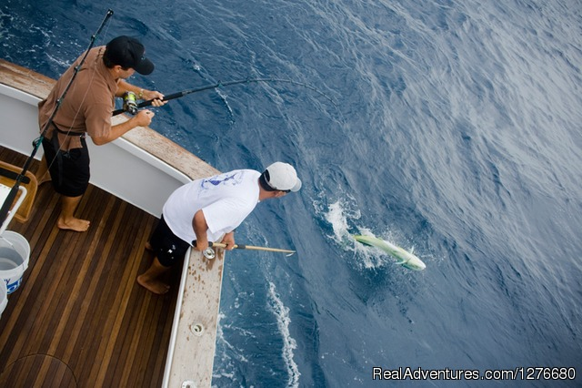 Mahi Mahi - CR Luxury Rentals & Fishing