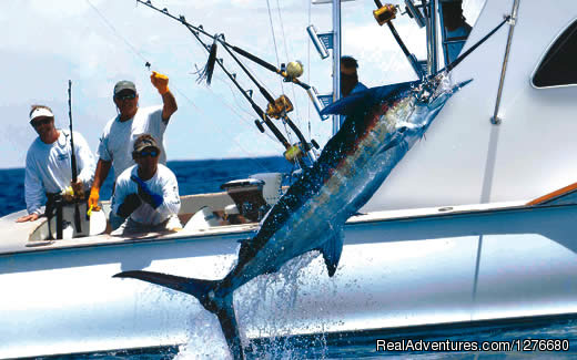 Offshore Central Pacific Blue Marlin (#6 of 10) - CR Luxury Rentals & Fishing