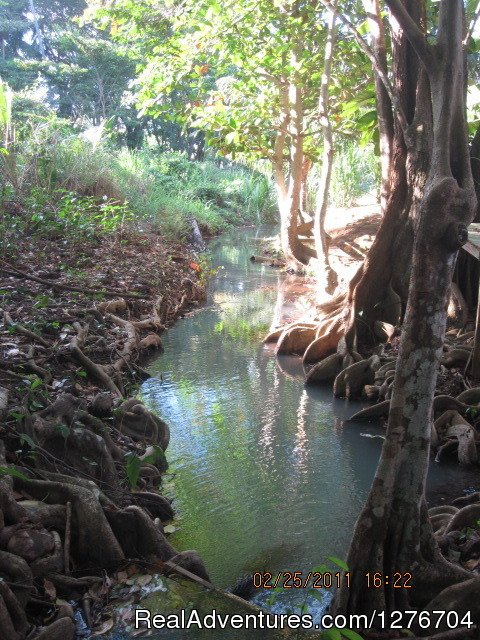 Mangrooves along the stream | Image #8/8 | Enjoy nature and feel home at Riversideview House