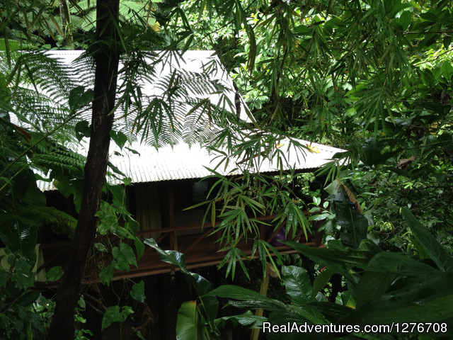 Cocoa Cottage: A view on Tree house