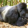 Uganda Safaris and Tours , Uganda Wildlife & Safari Tours