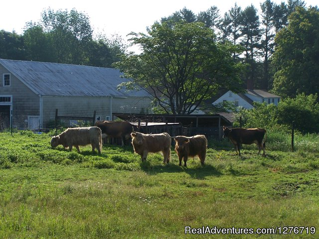 Working farm - The Guest House at Mustard Seed Farm