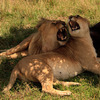 Amazing and Affordable 7 Days Kenya Safari Package Wildlife & Safari Tours Kenya