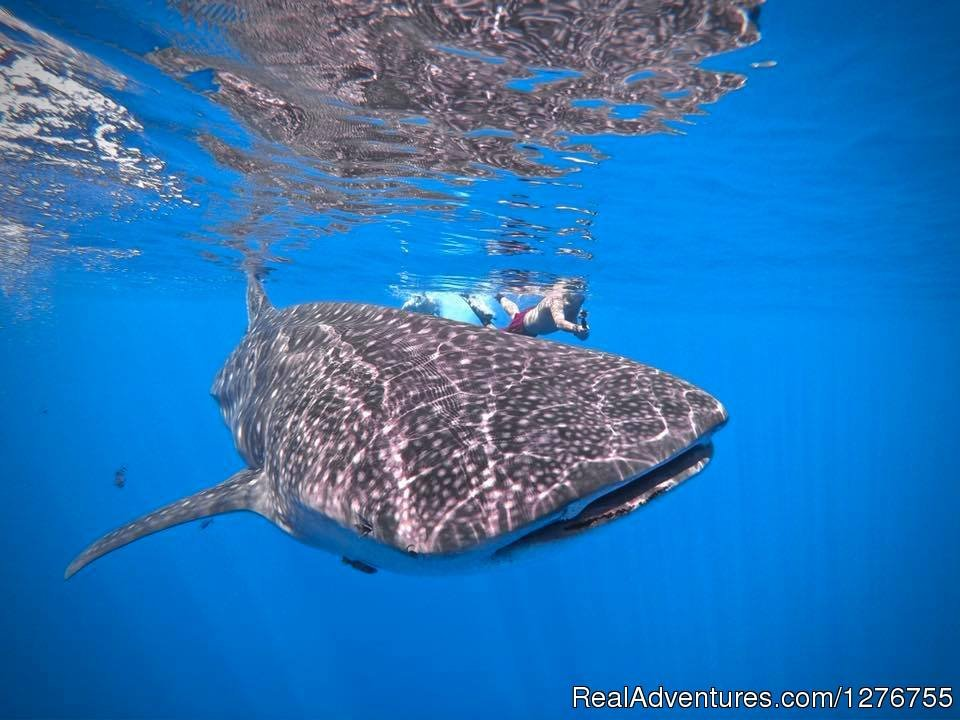 Image #8/12 | Shark Diving in Fuvahmulah