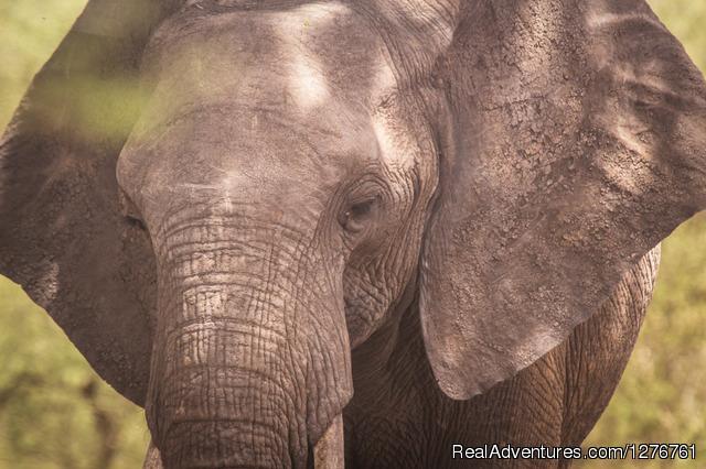 Tanzania Wildlife safaris, Kilimanjaro & Zanzibar Serengeti wildebeest migration