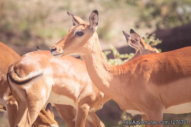 Ngorongoro Conservation Area - Tanzania Wildlife safaris, Kilimanjaro & Zanzibar