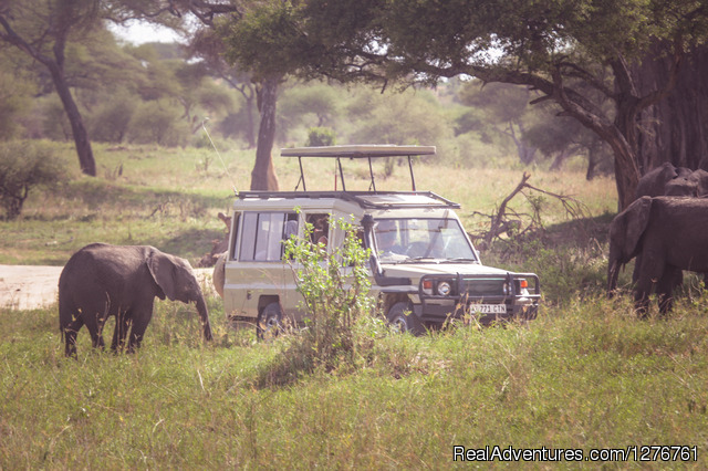 12 Days Kenya and Tanzania Wildlife Safari