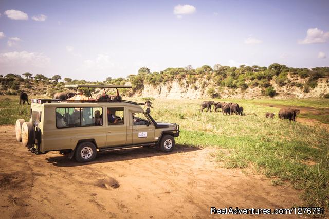 Tanzania Budget Safaries - Tanzania Wildlife safaris, Kilimanjaro & Zanzibar