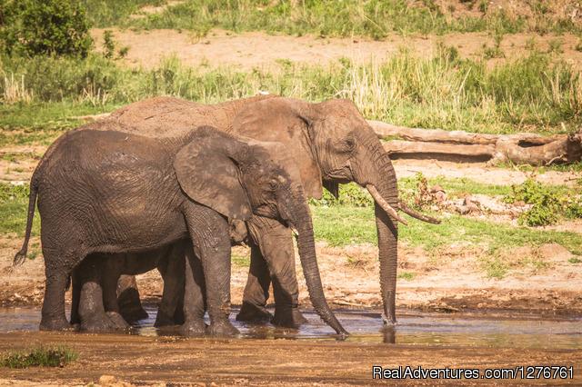 Tanzania Wildlife Safaries - Tanzania Wildlife safaris, Kilimanjaro & Zanzibar