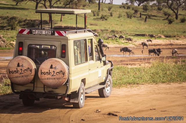 Tanzania Volunteer Safari - Tanzania Wildlife safaris, Kilimanjaro & Zanzibar