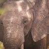 Tanzania Wildlife safaris, Kilimanjaro & Zanzibar Wildlife & Safari Tours Arusha, Tanzania