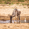 Tanzania Wildlife safaris, Kilimanjaro & Zanzibar