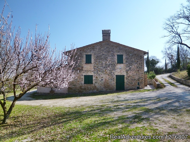 Farmhouse Casale del Noce (#6 of 7) - Old stonehouse with pool in the heart of Italy
