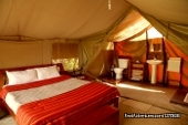 safaris bron in Kenya and Tanzania
