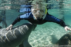 Snorkeling Eco Tours with Manatees Orlando, Florida Eco Tours
